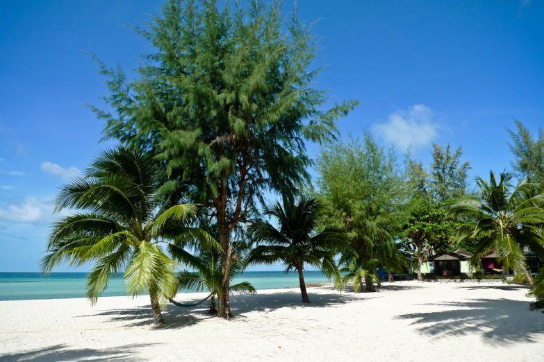 Пышная островная растительность