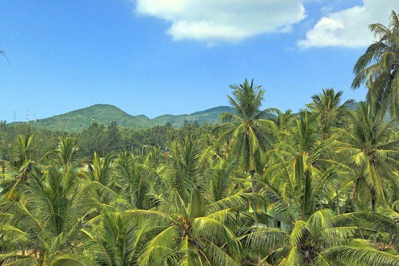 Джунгли на западе Пангана
