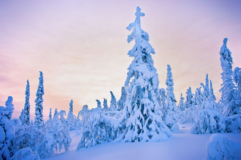 В краю снегов
