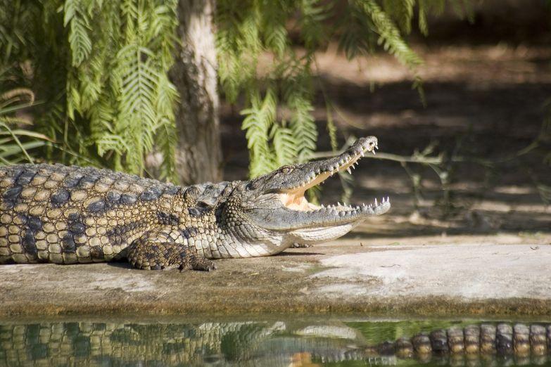 Заповедник крокодилов