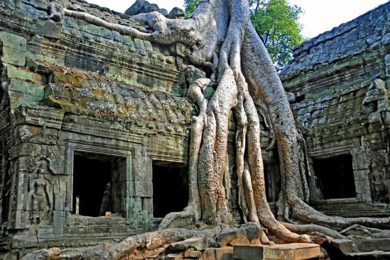 Дерево Баньян выросшее на храме