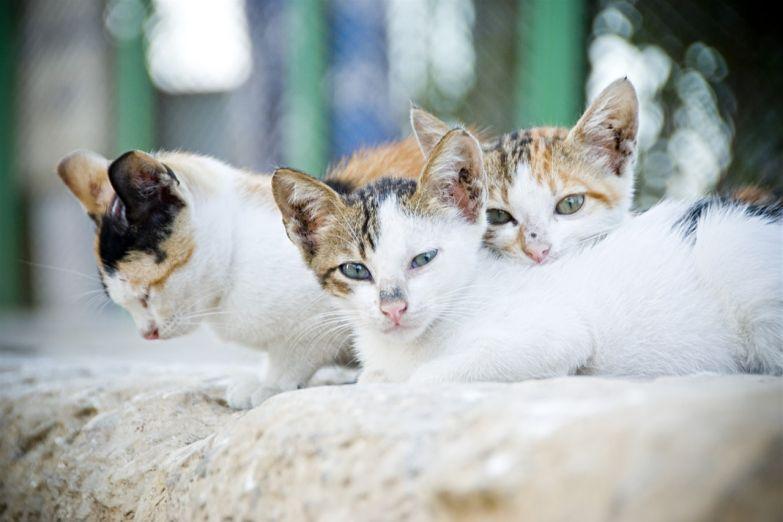 Кошки в Восточной бухте