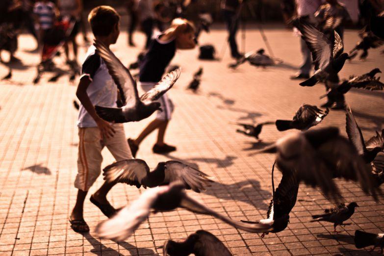 Мальчик гоняет голубей на площади Султанахмет в Стамбуле