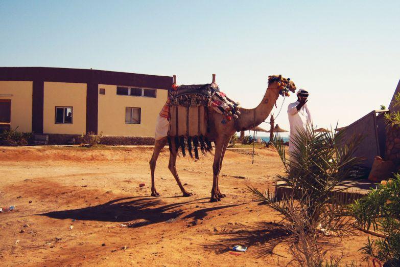 Погонщик верблюда требует плату за фото