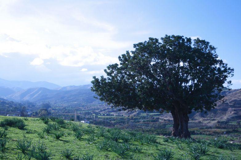 Пейзаж в окрестностях Никосии