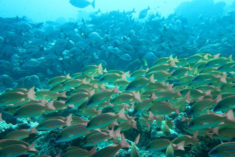Воды атолла Баа - настоящая сокровищница Природы