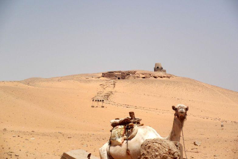 Верблюд на фоне гробниц знати