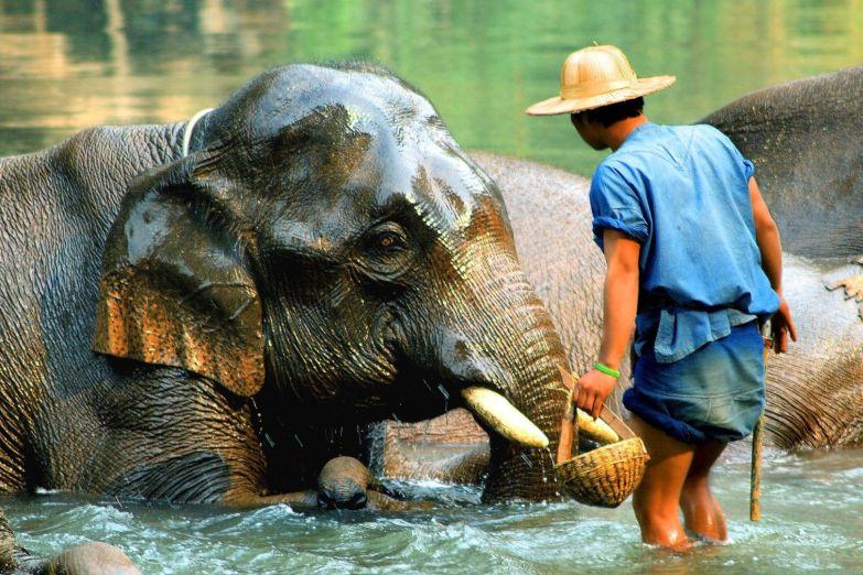 Время купания в слоновьем питомнике