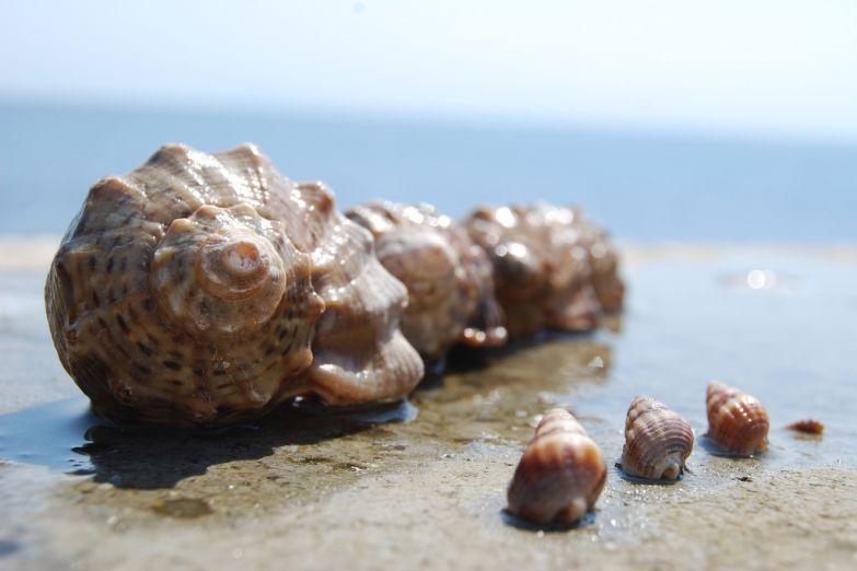 Ракушки на песчаном берегу