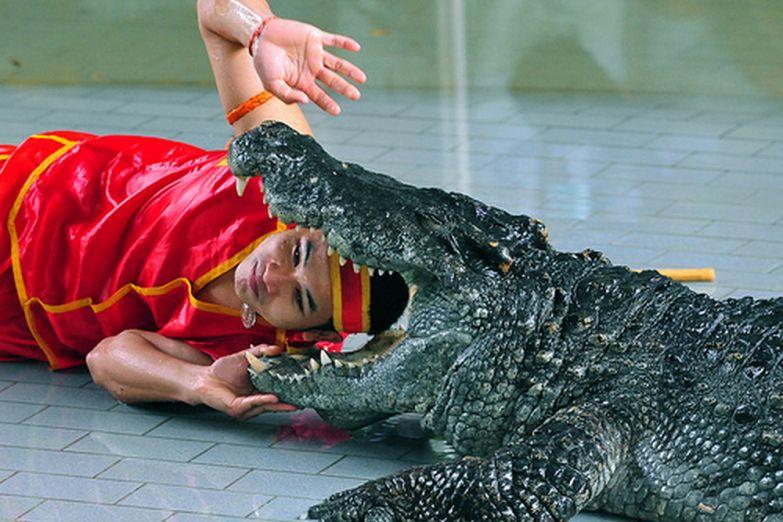 Шоу на Ферме крокодилов