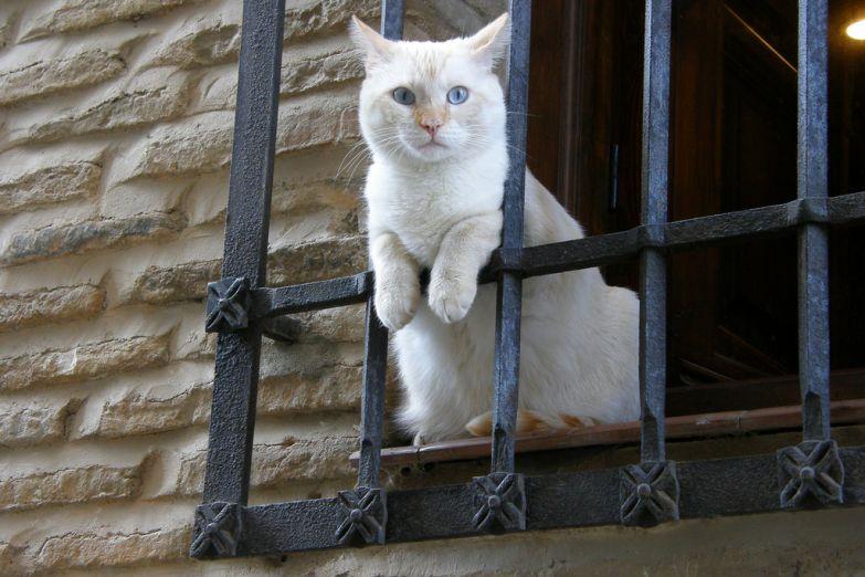 В Толедо любят кошек