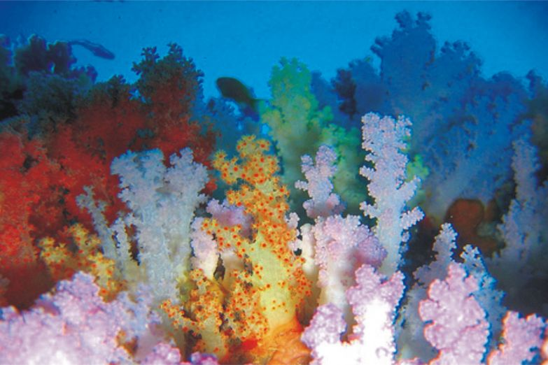 Разноцветные кораллы