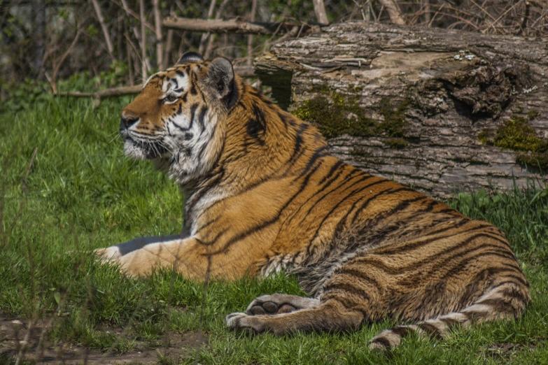 Обитатель Дрезденского зоопарка