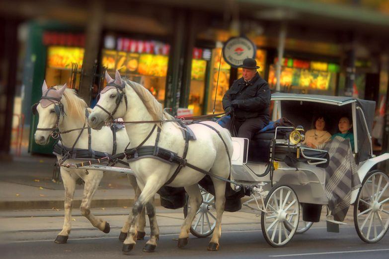 Карета на улицах Вены