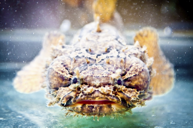 Рабы-скорпион в Хошиминском аквариуме